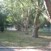 Княжеска градина