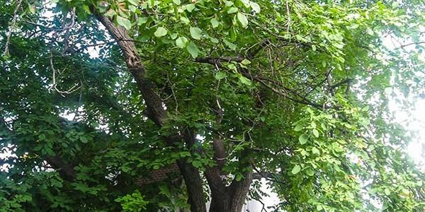 """Избор на победител в конкурса """"Дърво с корен"""""""